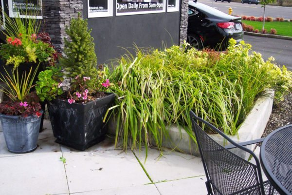 Water quality planter that infiltrates and treats stormwater at Black Rock Coffee Bar.